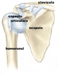 cum durerile articulare cu osteochondroza tratamentul aconitei cu artroză