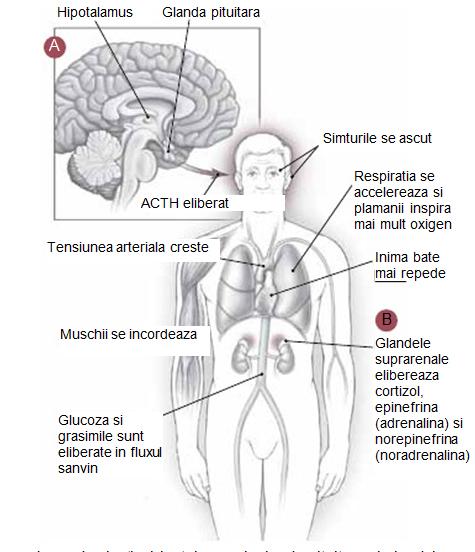 articulațiile doare din cauza stresului nume de injecții pentru durerile articulare