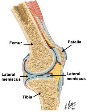 artroza articulației degetului de la picior