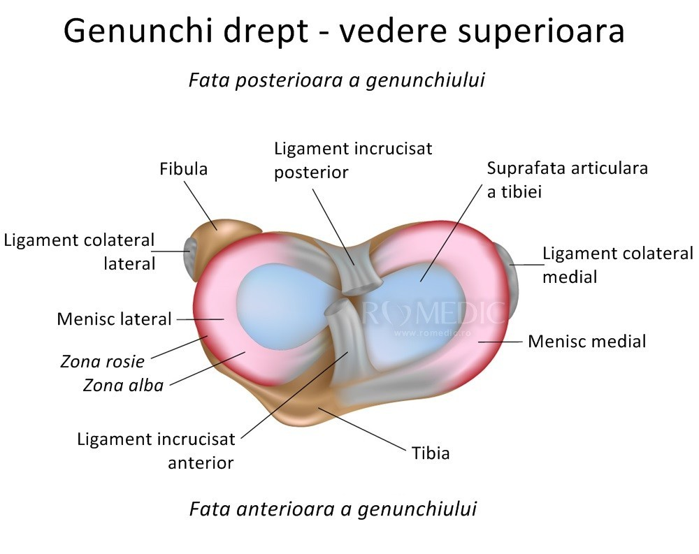 Inflamația genunchiului capsulei articulare, aceste articulații...