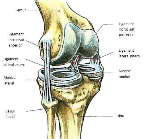 întărirea articulațiilor boala schlatterului articulația genunchiului