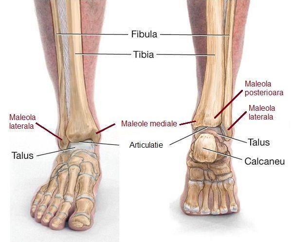 fracturi ale tratamentului articulației gleznei genunchiul inferior doare