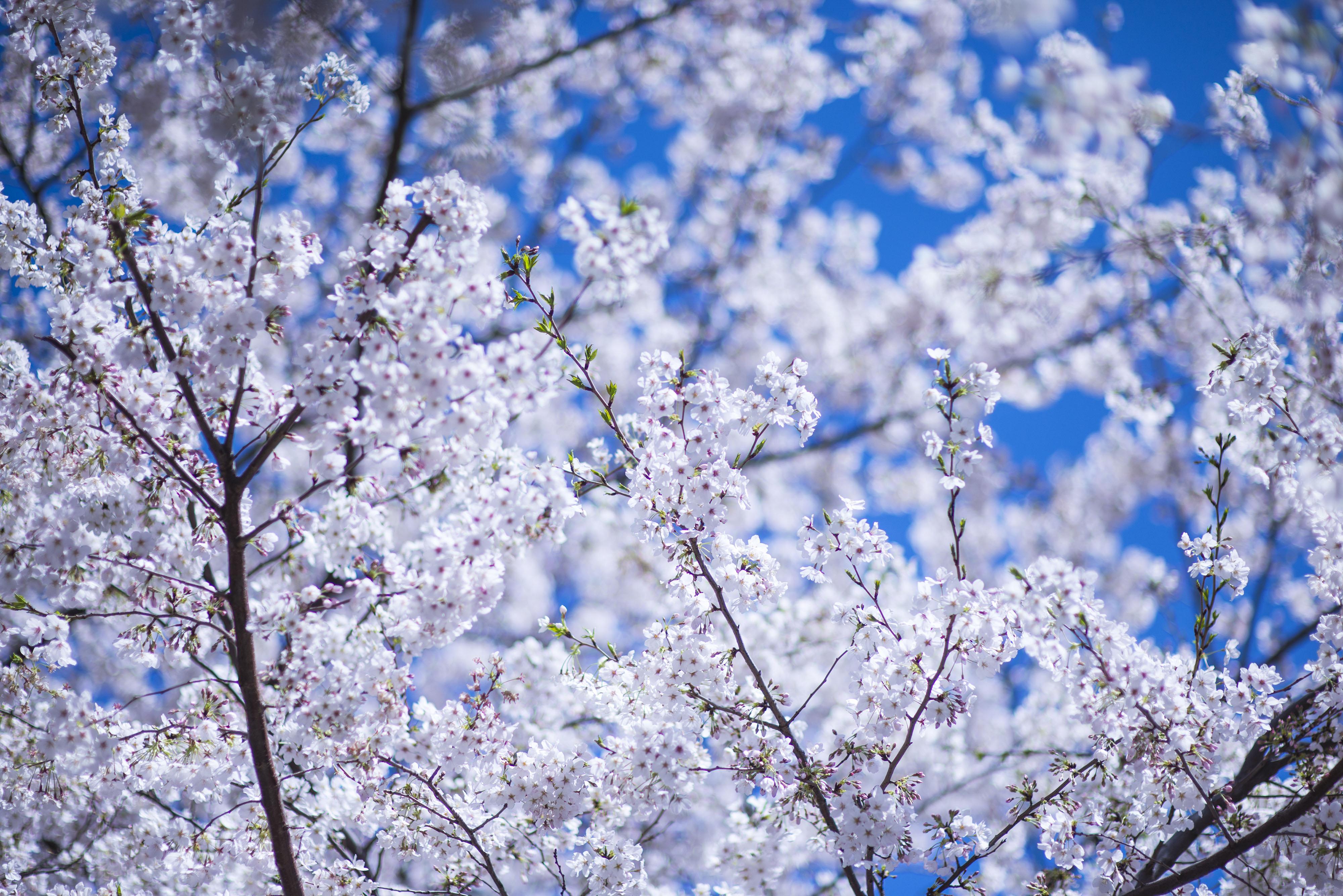 Primăvara aduce dureri articulare, tensiune și astenie | Stiri Utile