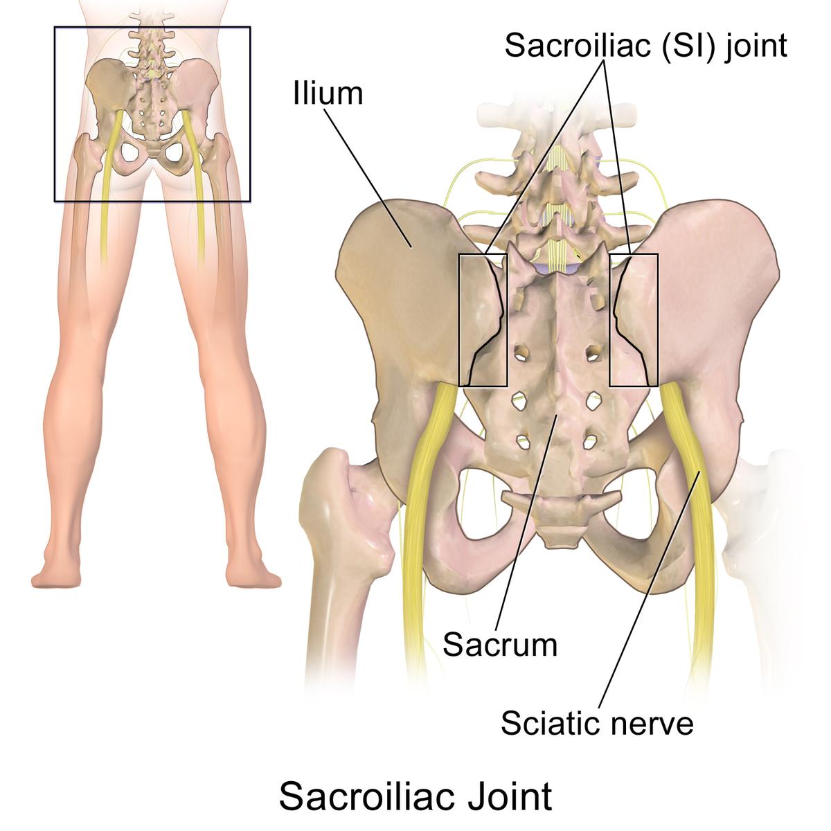 durere articulară sac iliacă