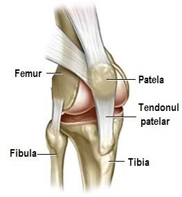 cauzele durerii la nivelul articulațiilor coapsei durere convulsivă în articulația șoldului