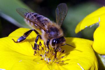 produse apicole pentru tratamentul artrozei articulațiile umflate și dureroase ale mâinii