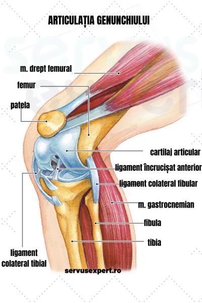 durere în articulația genunchiului drept