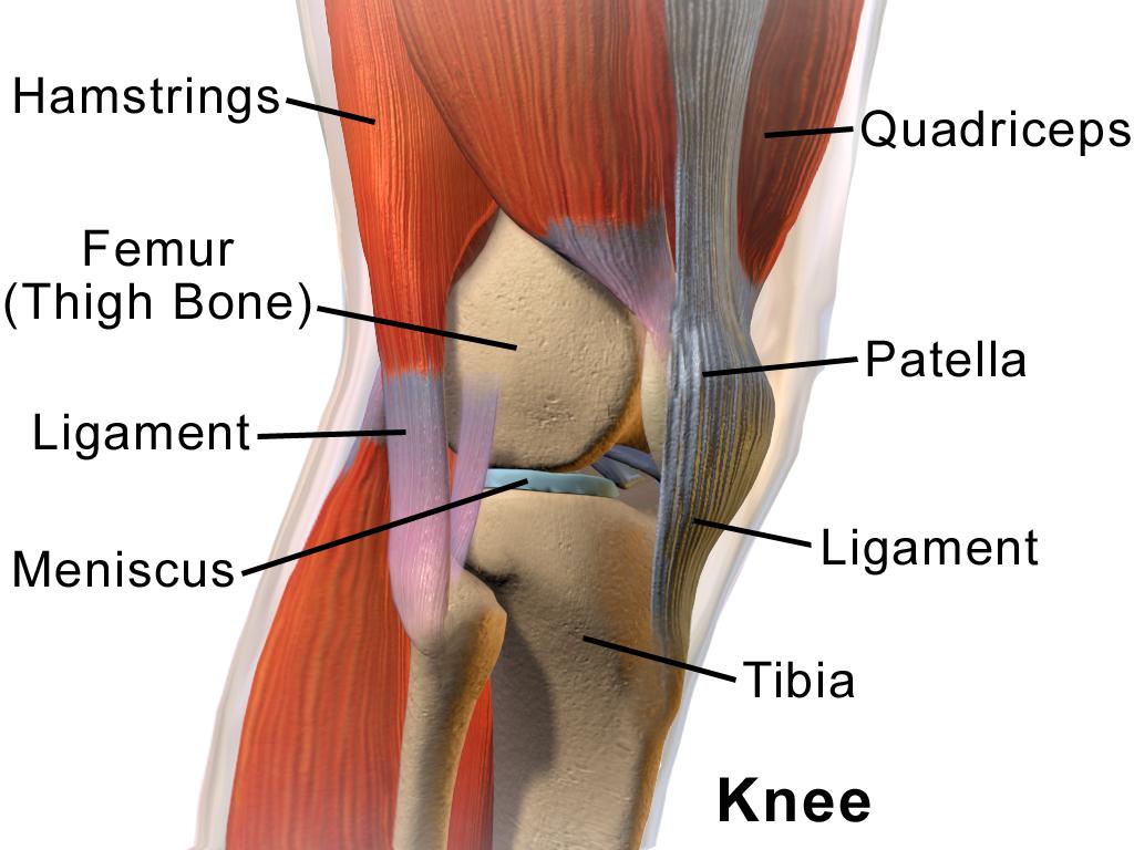 există o articulație în genunchi