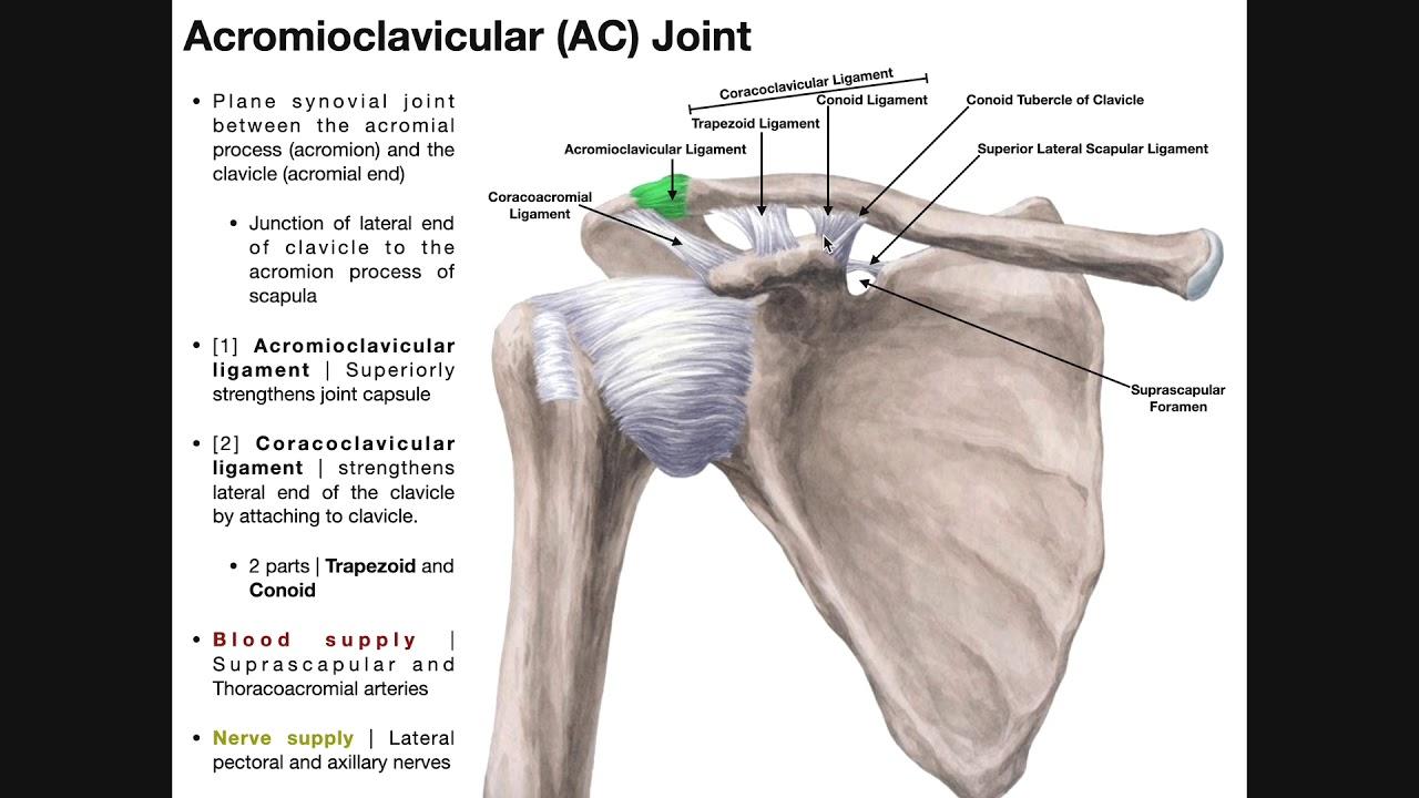 traumatism al articulației acromioclaviculare dureri la nivelul umerilor la ridicarea brațelor