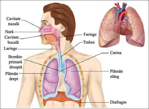 durere în bronhiile și articulațiile