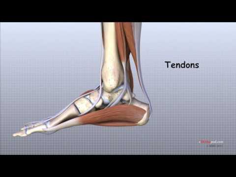 condroxid pentru artroza articulației gleznei