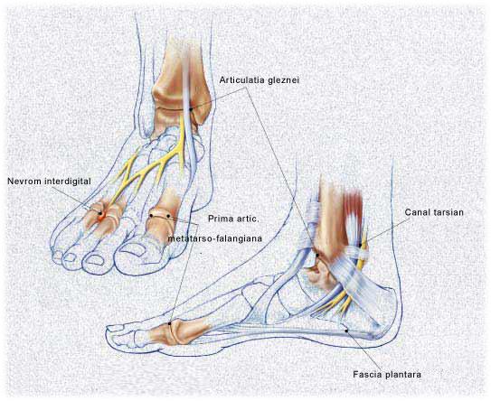 articulațiile picioarelor și gâtului