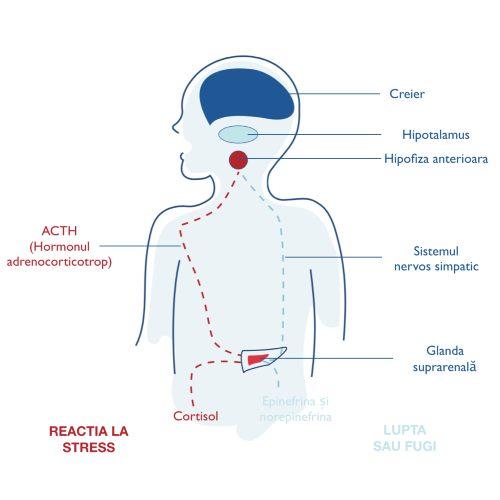 articulațiile doare din cauza stresului dureri ale gleznelor