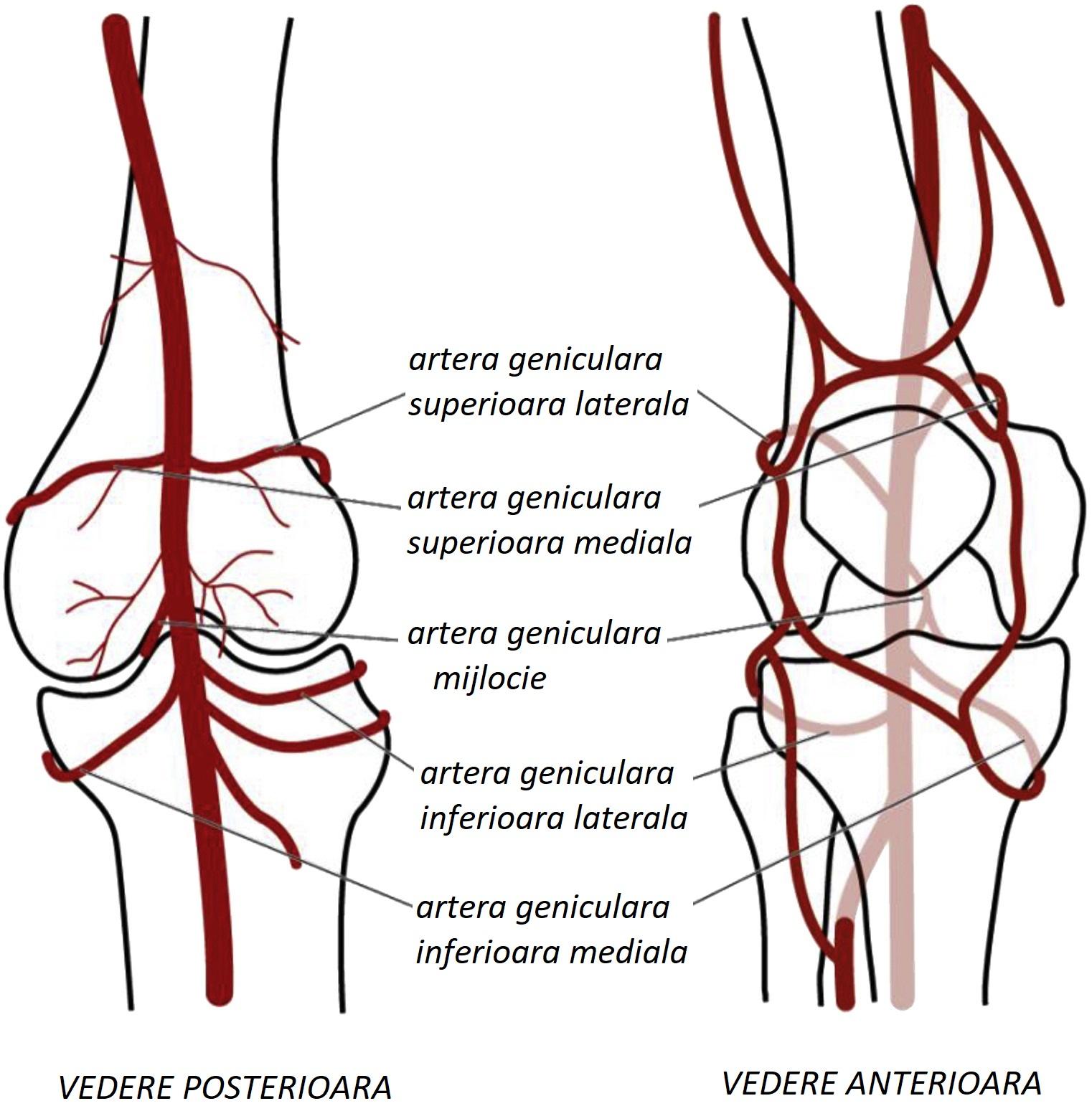 ce fel de pastile pentru durerile articulare umflarea genunchiului și a piciorului