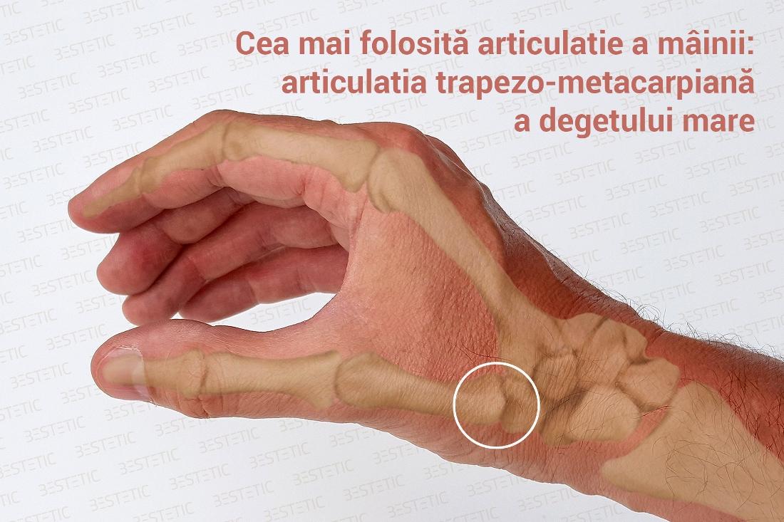 articulatii interfalangiene proximale