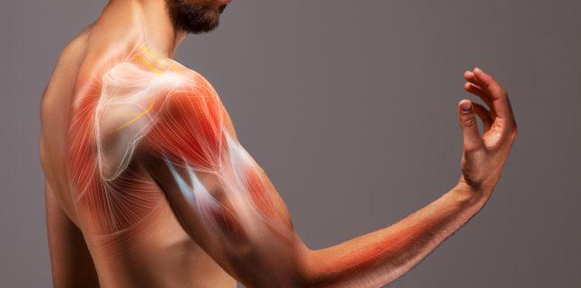 unguent pentru boli ale mușchilor și articulațiilor