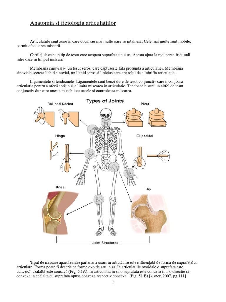 tratament articular kizner cum se bea condroitină glucozaminică