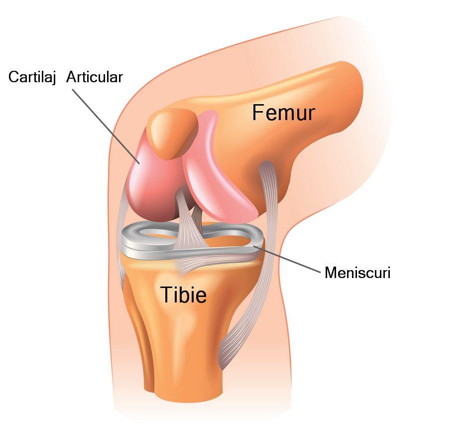inflamația articulației coastelor sternului skipar balsam gel pentru dureri articulare
