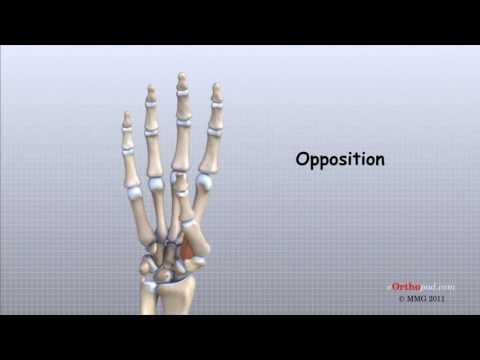 fracturi ale armelor de armă și leziuni articulare tratamentul periartrozei la nivelul genunchiului