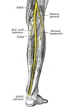 durere în articulația radială stângă cum se tratează artroza piciorului de gradul I