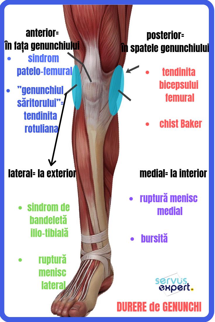 mușchii genunchiului doare