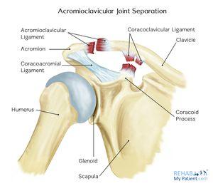 traumatism al articulației acromioclaviculare articulații de balsam pur