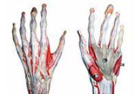 durere la nivelul articulației radiocarpiene