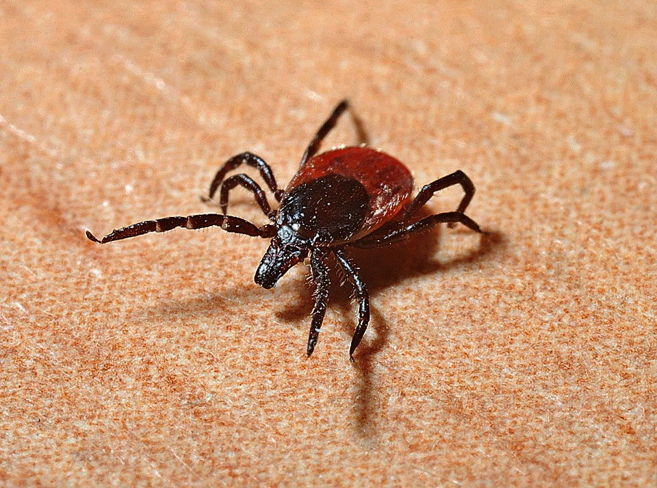 Cum recunoastem boala Lyme. Cauze, simptome, tratament