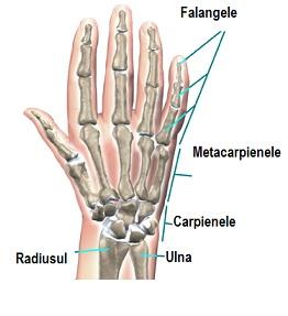 Simptomele și tratamentul leziunilor ligamentului genunchiului