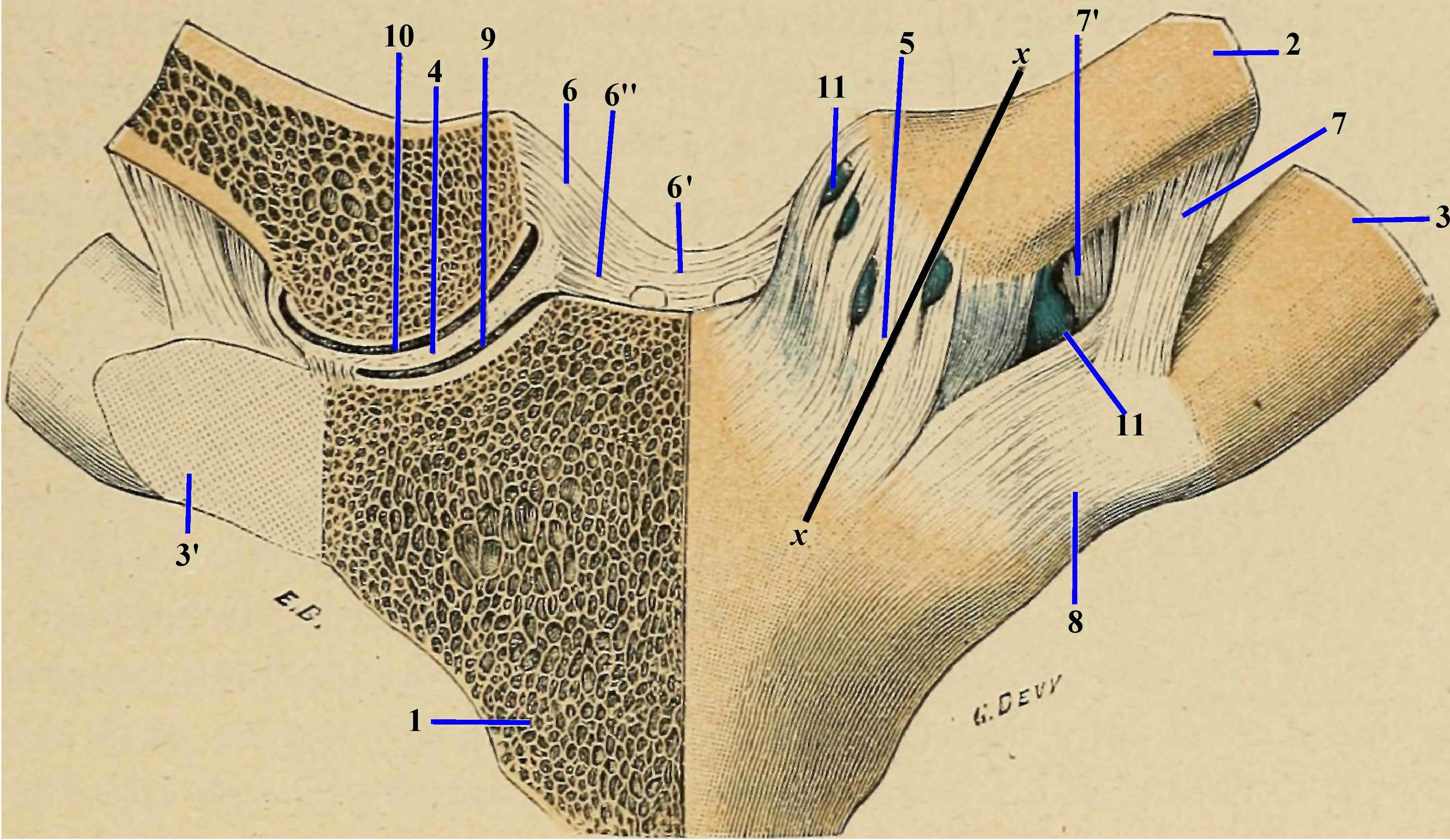 artrita articulară sternală durere în articulația degetului inelar