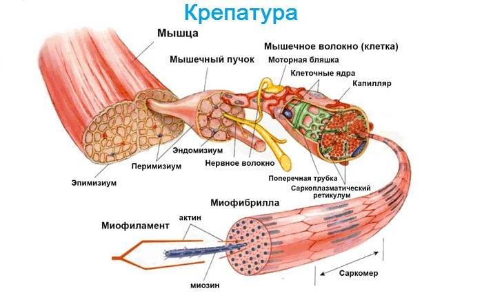 dureri articulare și musculare în oncologie gleznele rănite după fotbal
