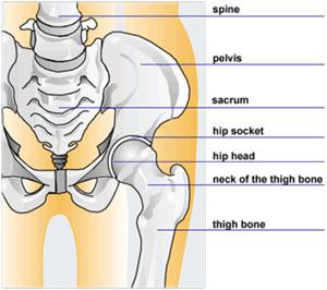 restaurarea cartilajului șoldului